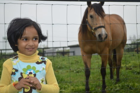 A Day With The Horses