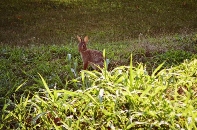 A Rabbit Under My Deck - by Jyoti Singh